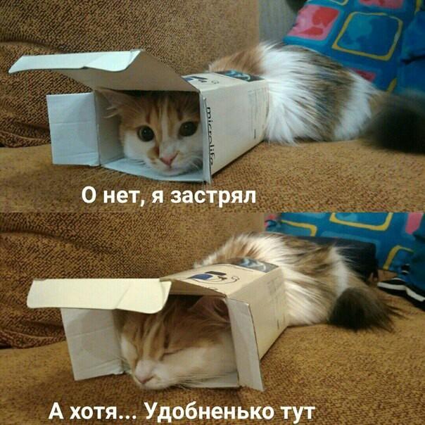 котэ-коробка-4069302.jpeg